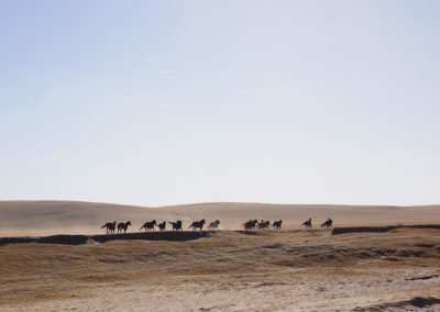 Mongolie 17